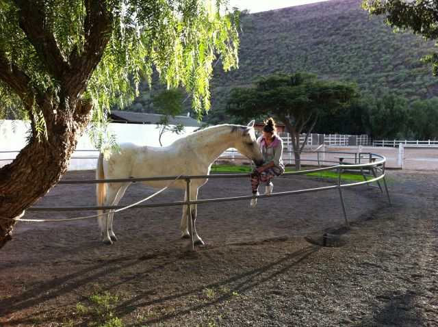 Kveldsstemning, hest, El Tablero, Gran Canaria Sør