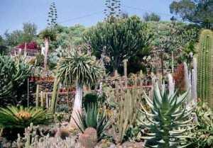 palmex-cactus