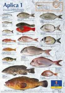 Fisketur på Gran Canaria - Fisk Gran Canaria