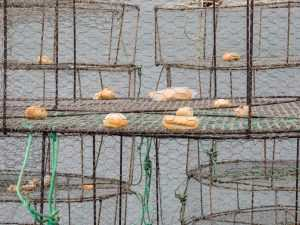 Fisketur på Gran Canaria - Teiner klare til bruk