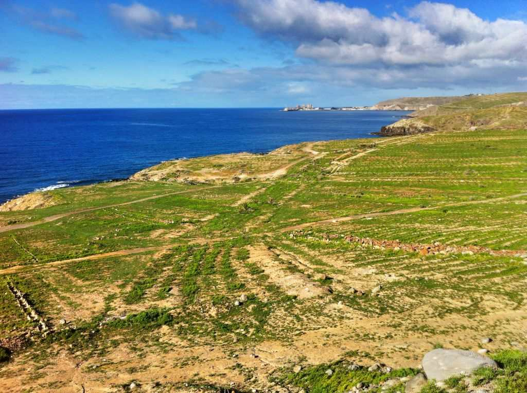 Den tørre kysten grønnes etter regnvær sør Gran Canaria