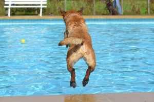 bassenger-hund - blogg