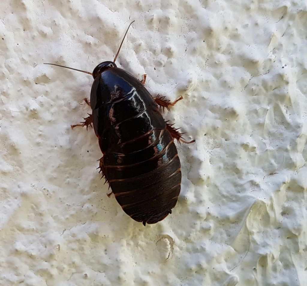 kakerlakker i huset