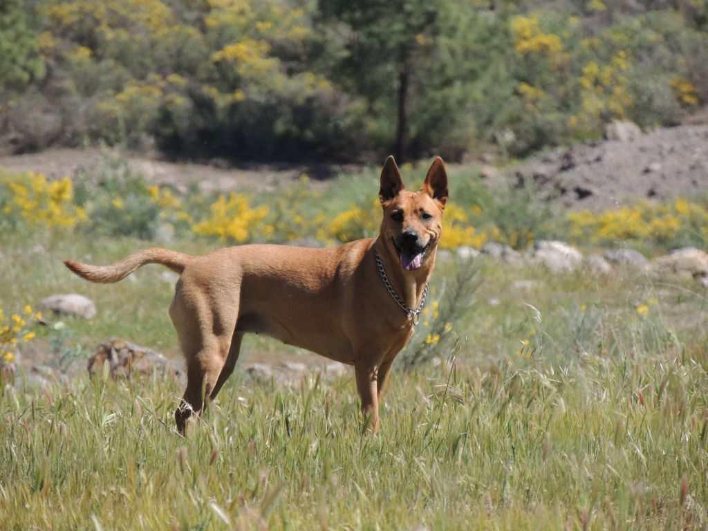 Valpen fra helvete ble en fantastisk hund. theislandsinthesun.com