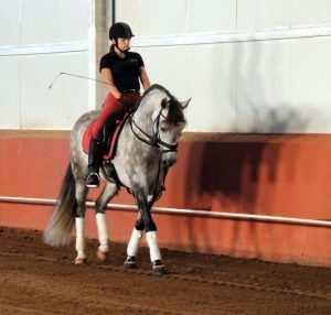 Trening med hest