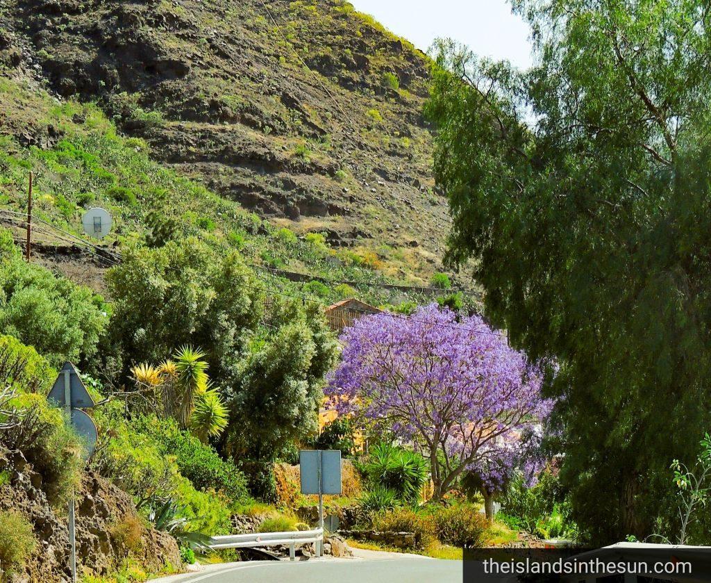 Mogan Gran Canaria Natur