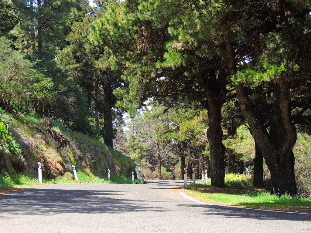 Tejeda Gran Canaria - Naturen ved Mirador Degollada