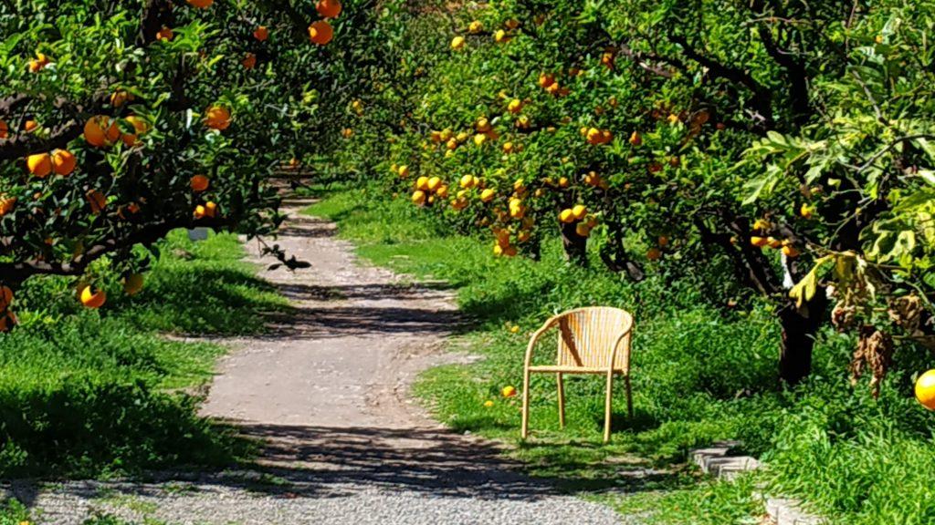 Valle de Agaete - Appelsinlund