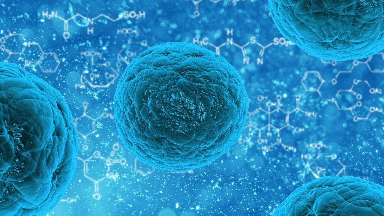 Renhold bakterier